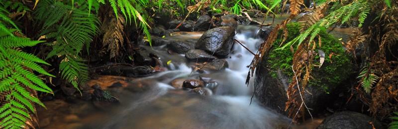streamheader